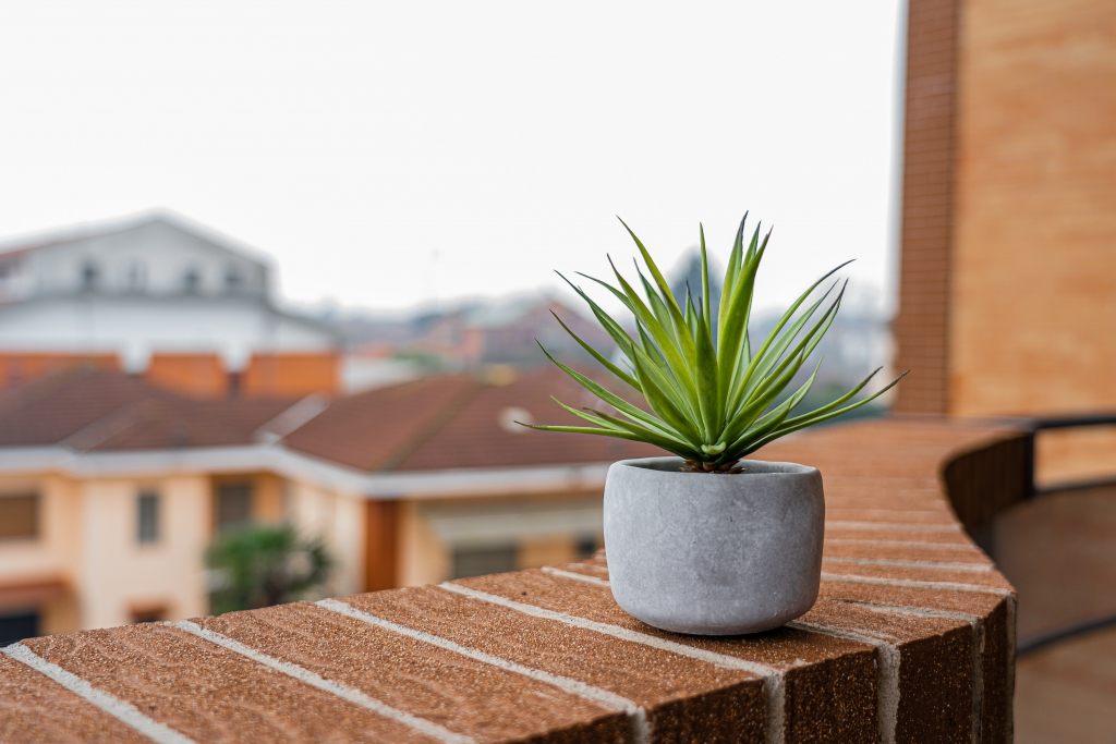 green-plant-in-gray-pot-on-brown-brick-surface-3722570.jpg
