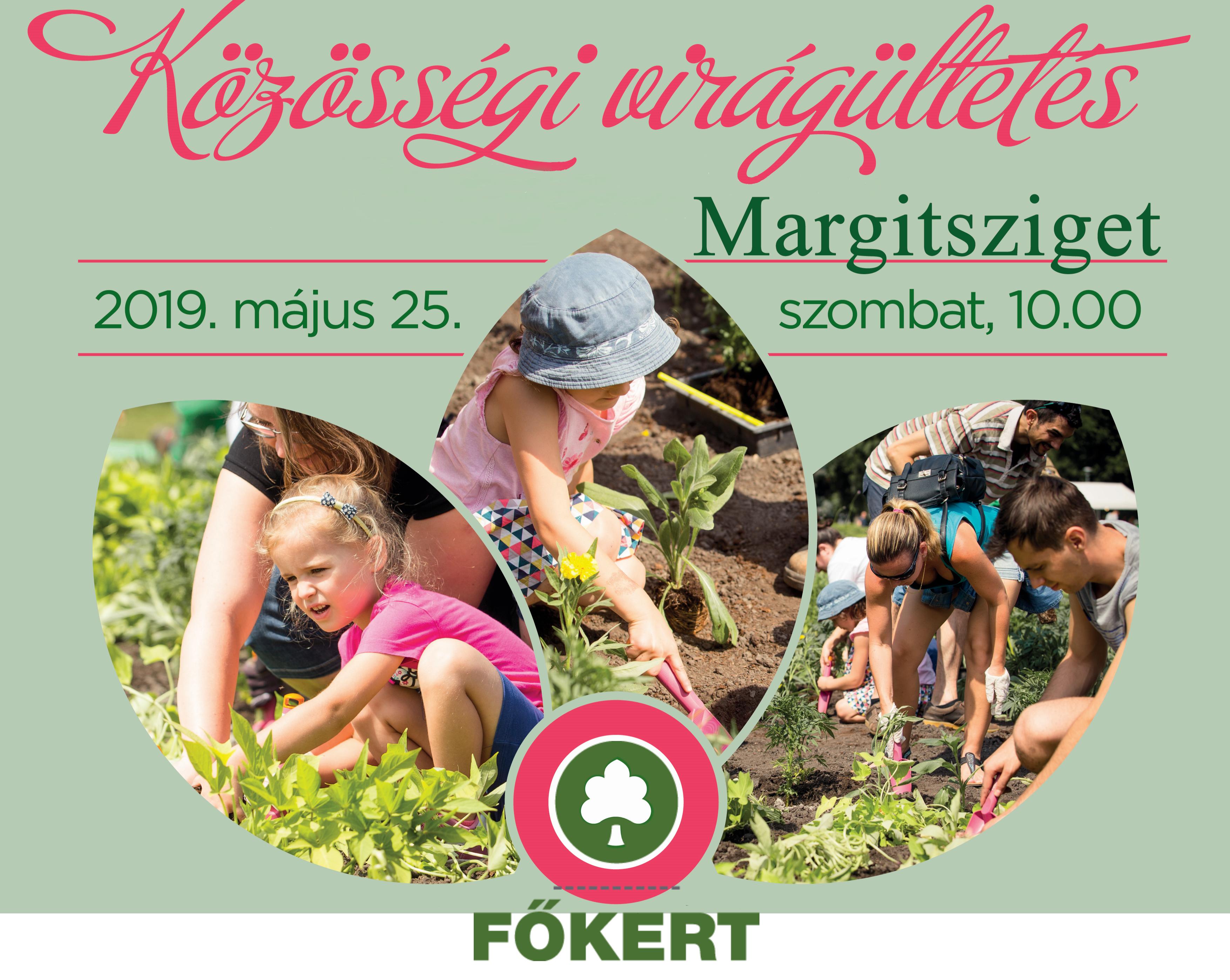 Margitsziget_virág